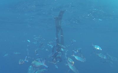 10 upside down, 2014, Filmstill, Unterwasservideo