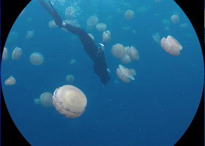 Jellyfish_bubbles, 2019