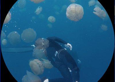 Jellyfish_bubbles_1, 2019